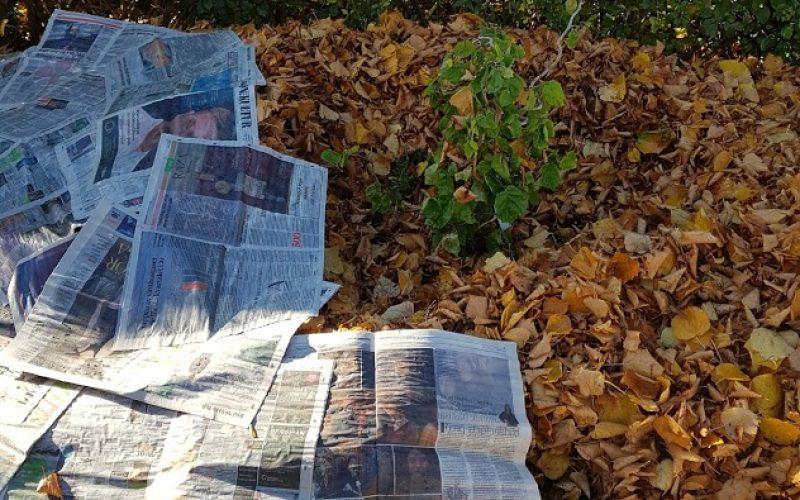 Täck med hästskit, löv och vattna,  sedan tidningar.